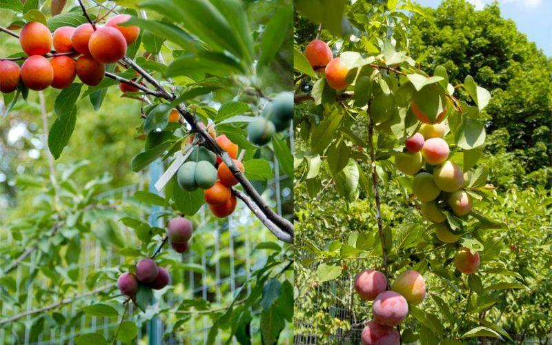 40 différentes sortes de fruits