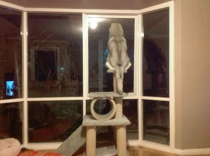 # 6 Un chien s'adaptant aux propriétaires de chats