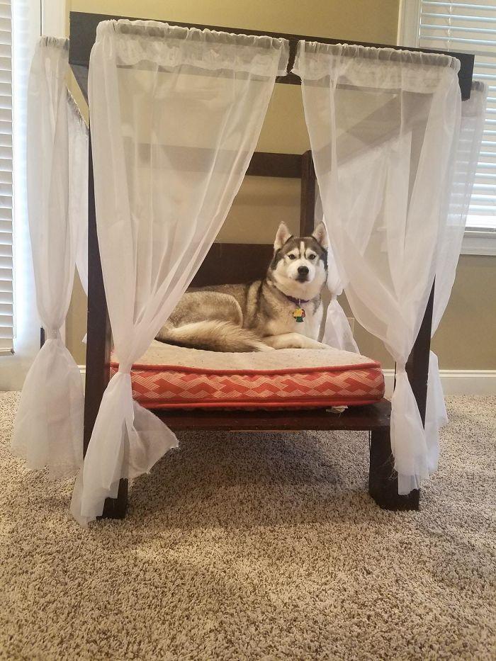 J'ai construit mon Husky un lit à baldaquin, et maintenant elle n'en sortira pas