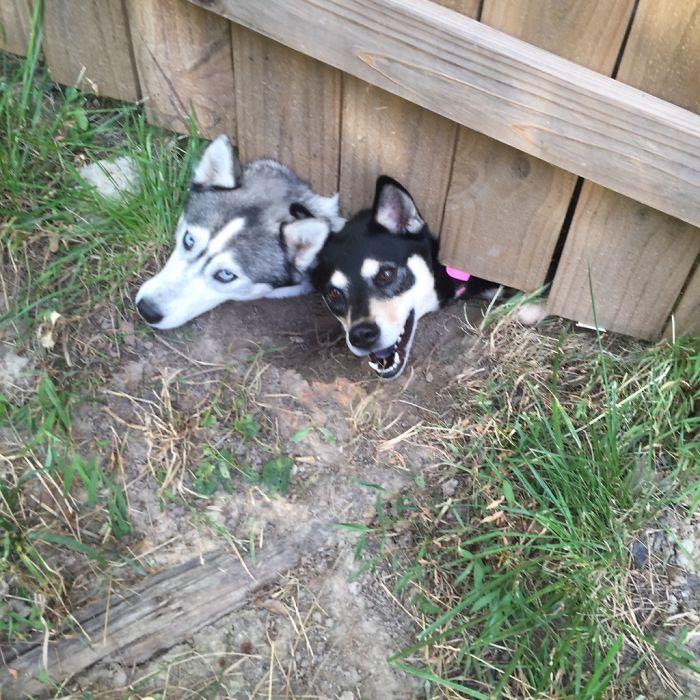 Nous avons de nouveaux voisins. Ils ont des chiens