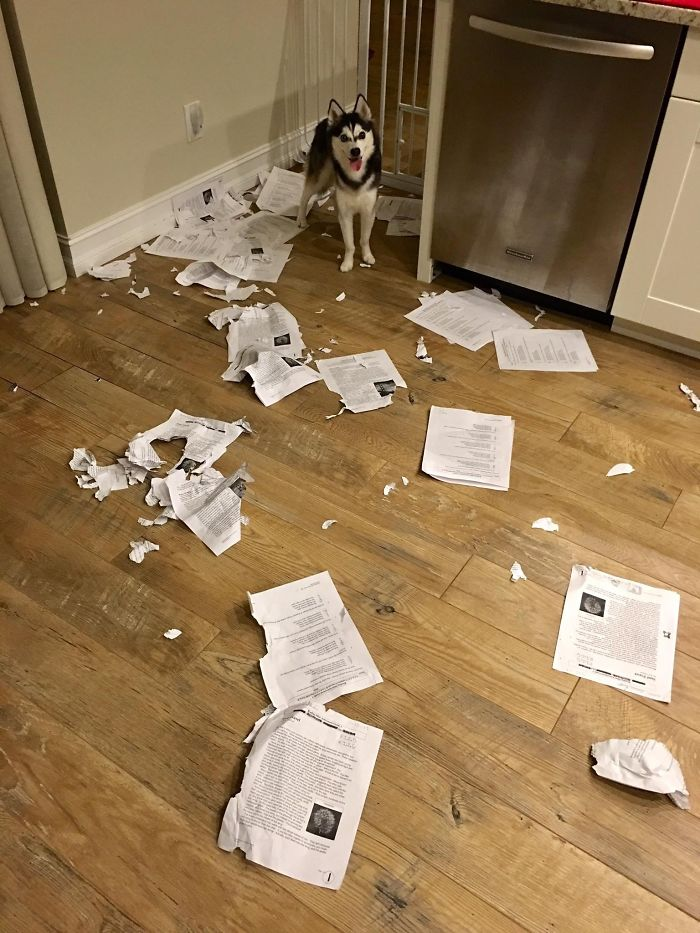Désolé classe, mon chien a mangé tout le monde à la maison