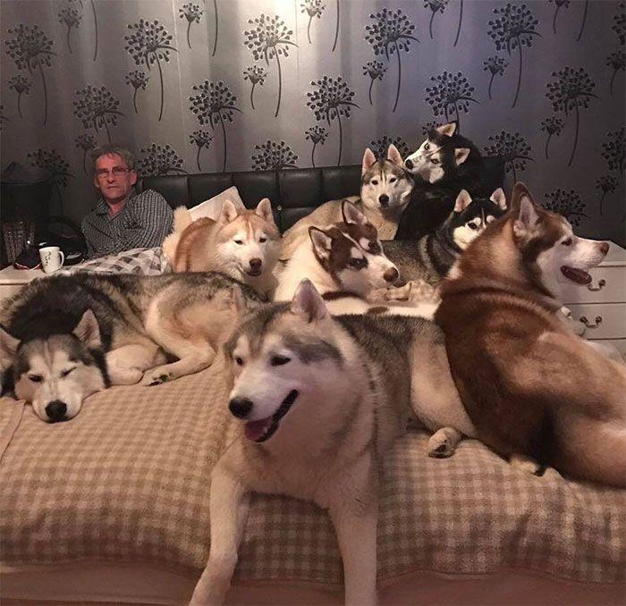 Ma tante et mon oncle ont 20+ chiens Husky et ont ce problème chaque nuit