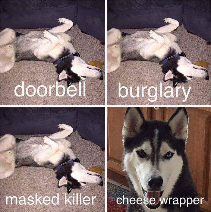 Quelqu'un d'autre a un chien comme ça?