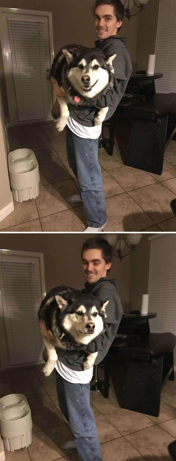 Husky de mon ami avant et après nous l'avons appelé Fat