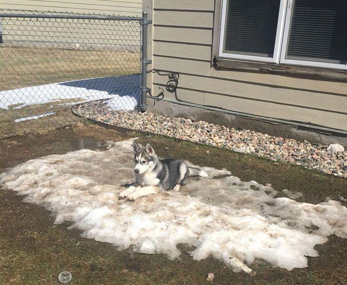Il a du mal avec la fonte des neiges