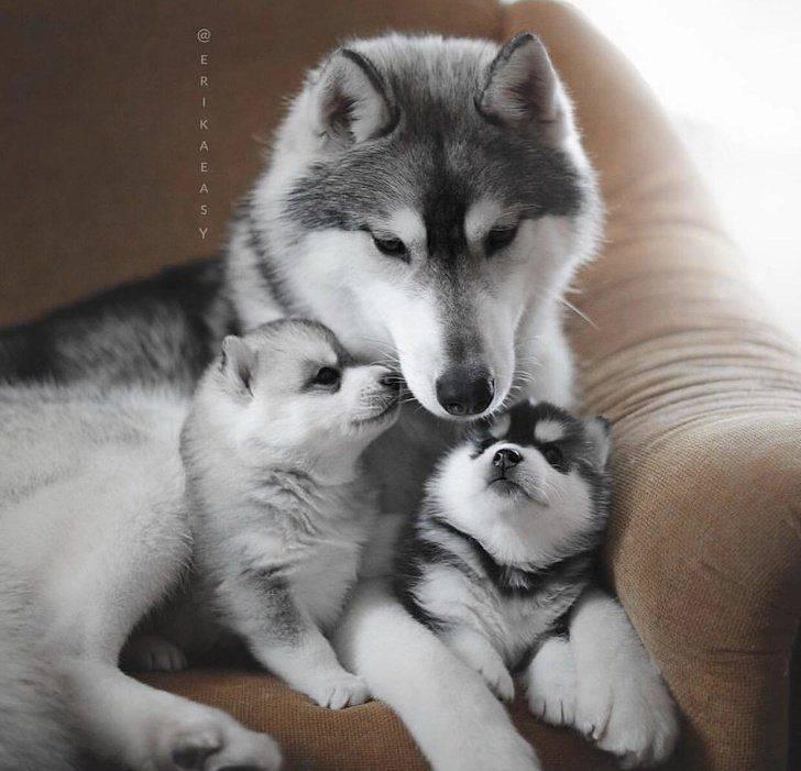 parents animaux