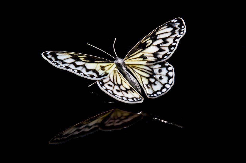 papillons rares