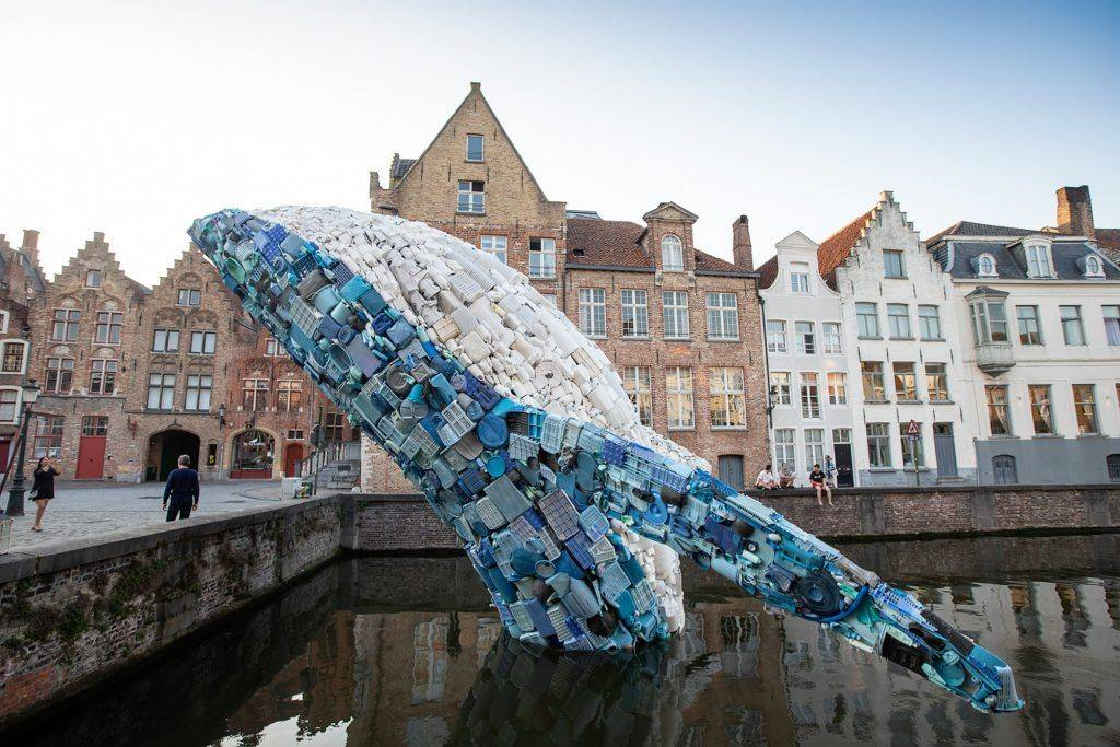 baleine de 18 mètres