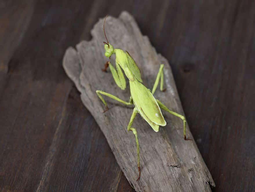 insectes en papiers