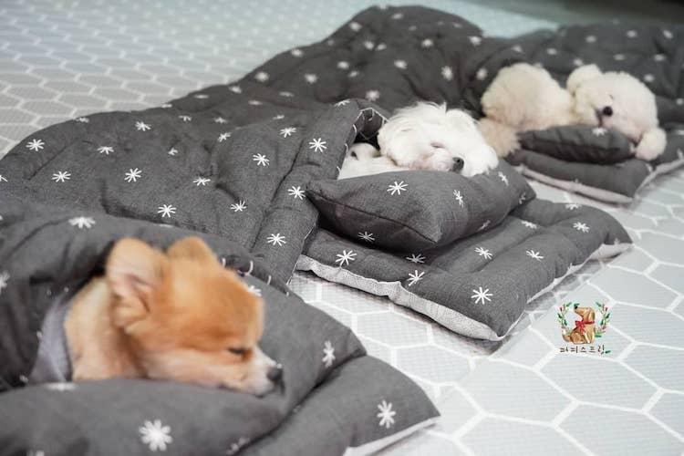adorables de petits chiens