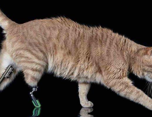 chat prothèses