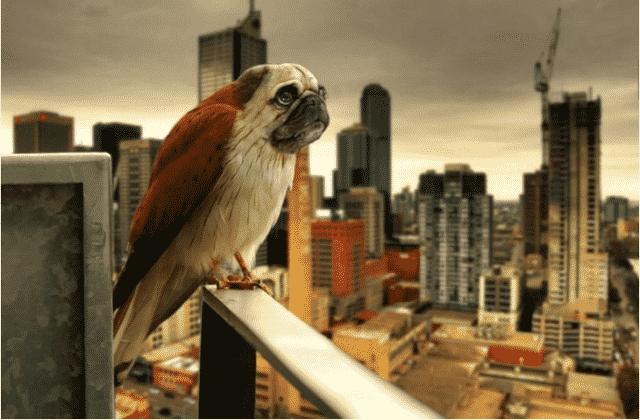 oiseaux à tête de chien