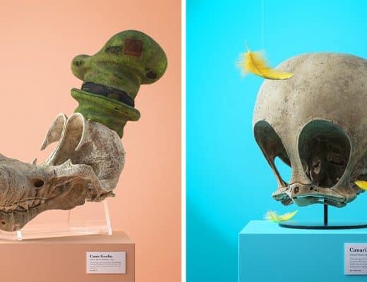 crânes fossilisés de personnages de dessins animés connus