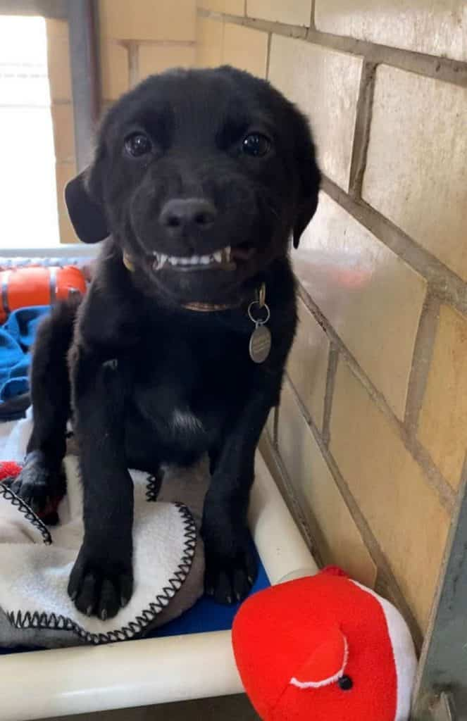 chiot souriant