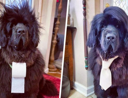 femme coiffe son chien