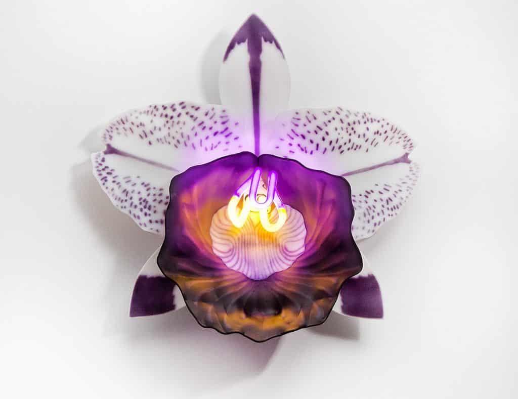 orchidées en verre