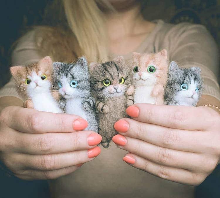 chats feutrés