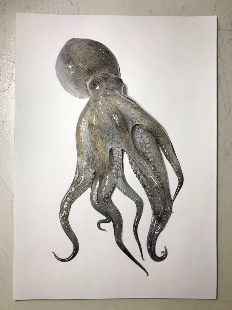 dessin réaliste d'une pieuvre