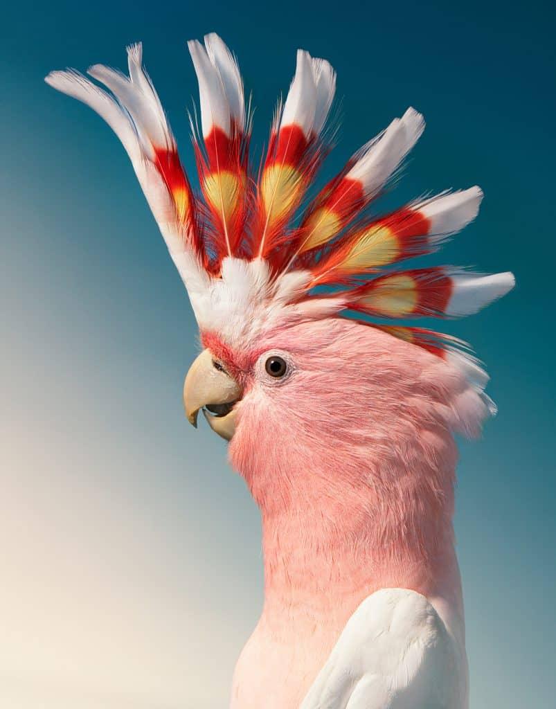 oiseaux vulnérables