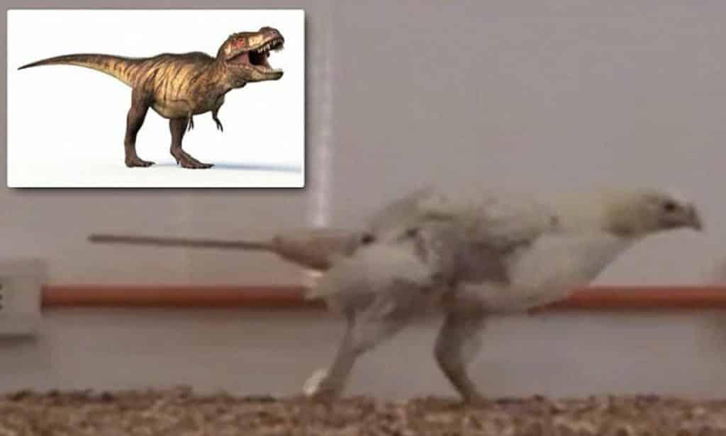 bras T-Rex