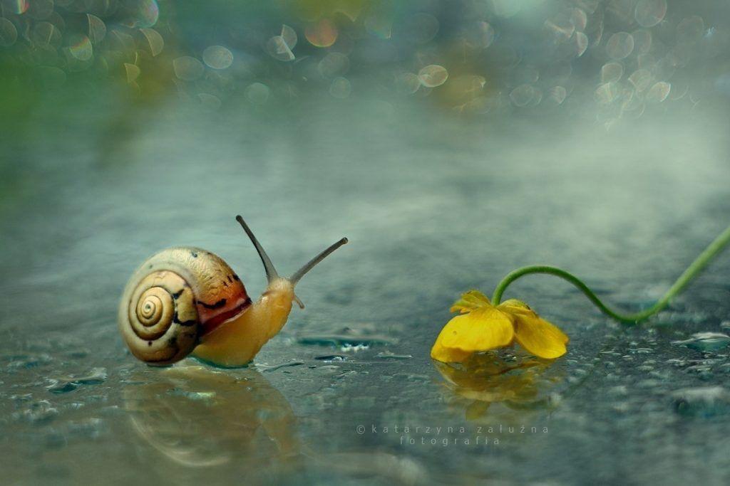 portraits d'escargots