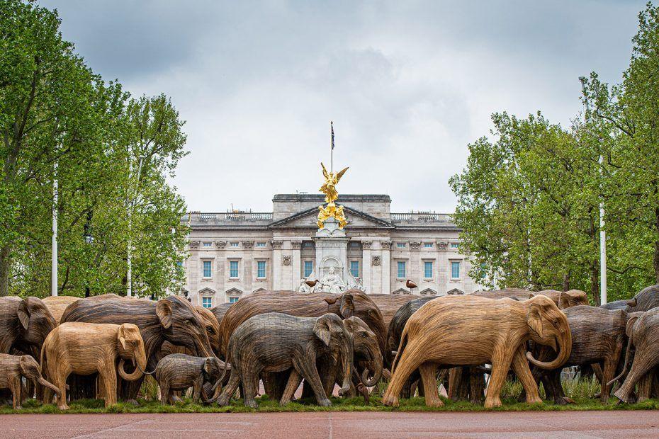 troupeaux d'éléphants